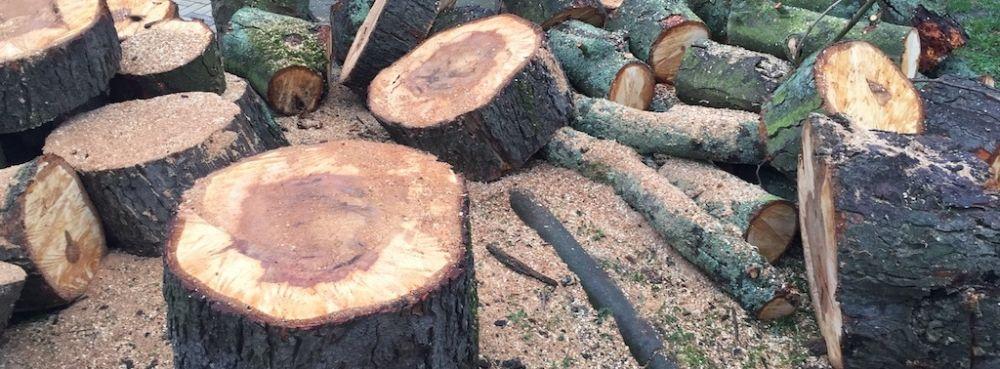 Bomen-kappen-1
